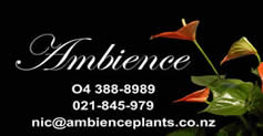 Ambience plants contact details